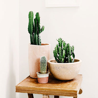 Cactus Pot Candle